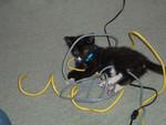 Jedi, the TCP/IP over kitten fluff implentation