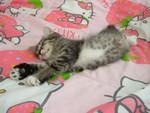 Mizugi, taking a nap.